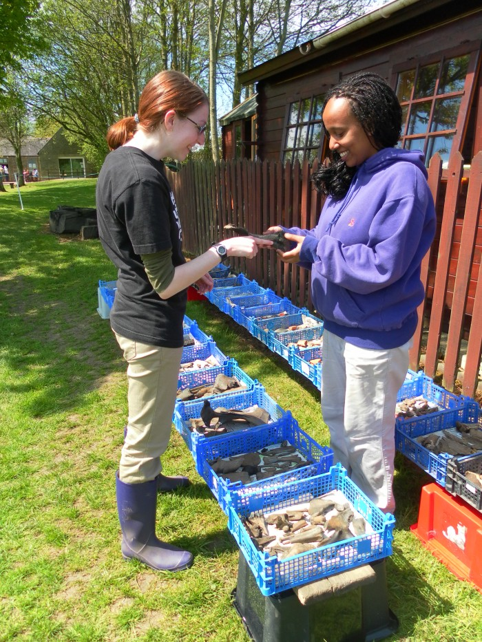 Stephanie, an anthropology major with a serious interest in animal bones, gives an impromptu lesson to Rohana about bone types and animal remains drying in the sun (yes, the sun! It shone all day today!) after being washed for processing and analysis.