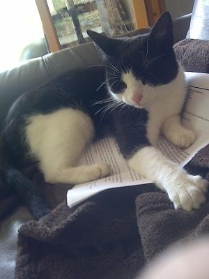 jenny the cat